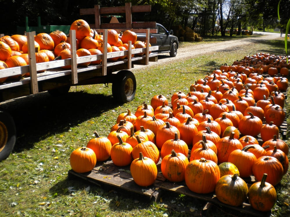 best pumpkin picking near me 2017 where to pick your own pumpkins. Black Bedroom Furniture Sets. Home Design Ideas