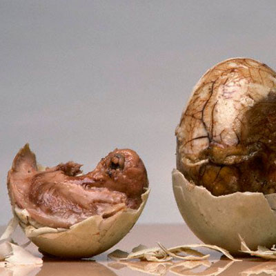 Balut eggs for sale / Sequoia national park lodging