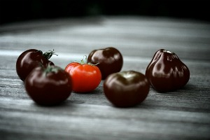 purple tomatoes invented indigo rose tomato. Black Bedroom Furniture Sets. Home Design Ideas
