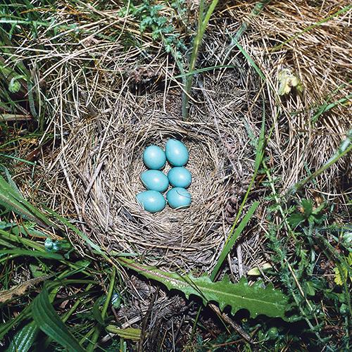 Kiri Tannenbaum: Passenger Accused Of Concealing Wild Bird Eggs Inside The